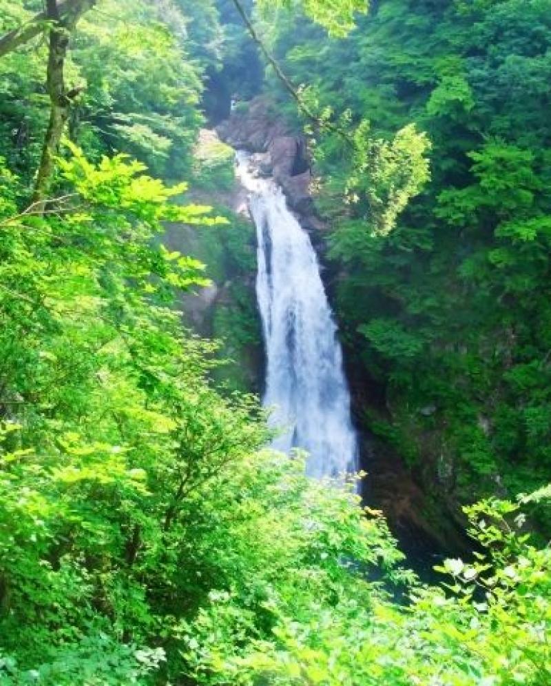 Akiu Otaki Waterfall in fresh green season.