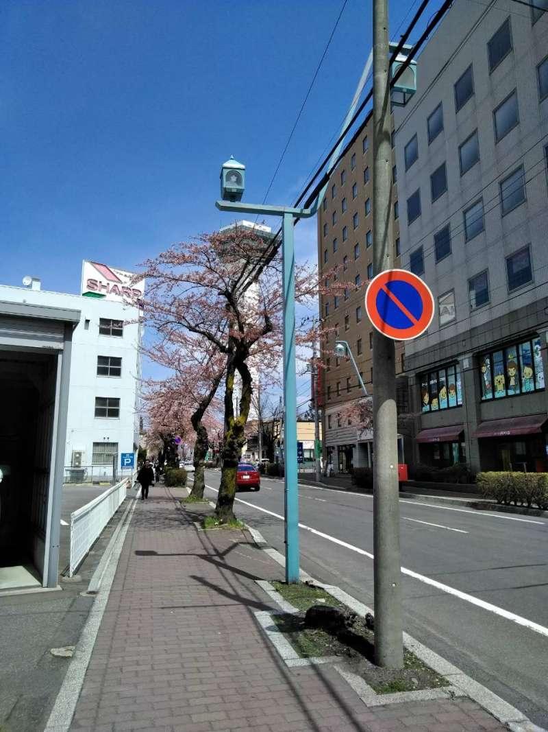 Goryokaku Tower and cherry blossom.