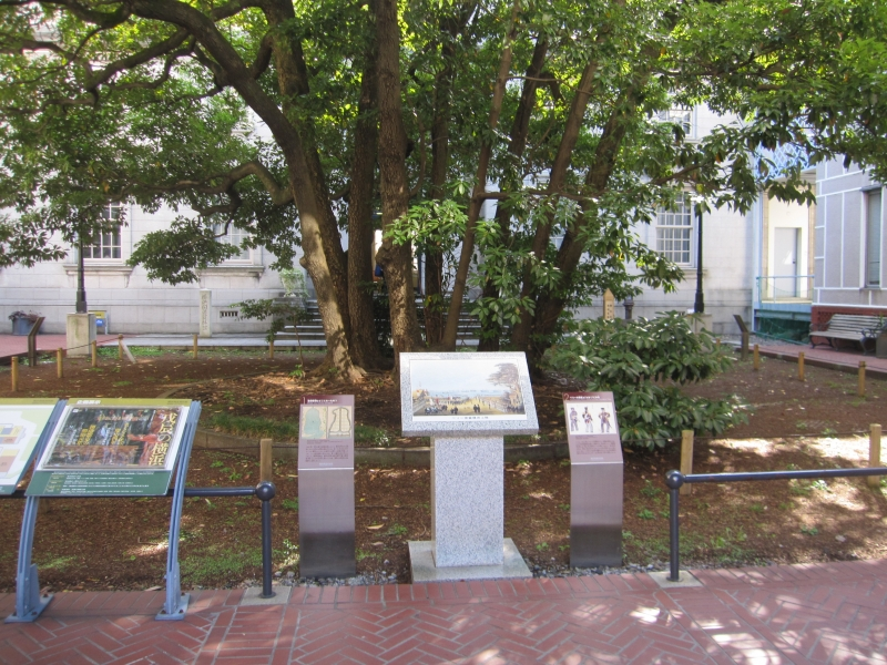 Old tree seeing Yokohama's progress: It is  over 150 years old. It welcomed Commodore Perry in 1854.
