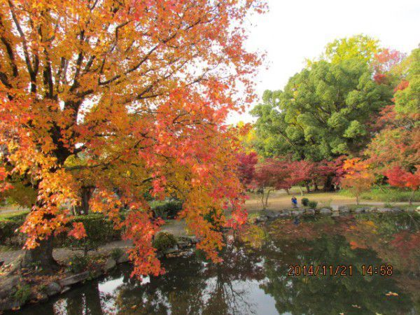 Beautifully changing colors of autumn leaves at Shosei-en Garden