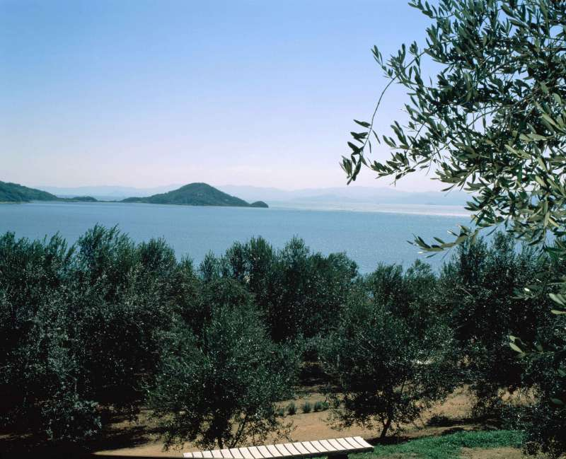 Shodoshima is the birth place of olive cultivation in Japan.