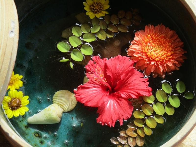 Okinawa's island flower