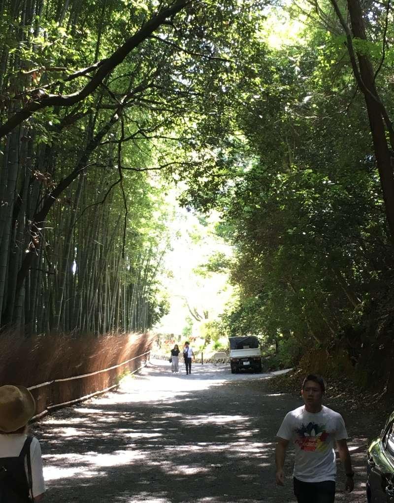 Bamboo Grove in Arashiyama