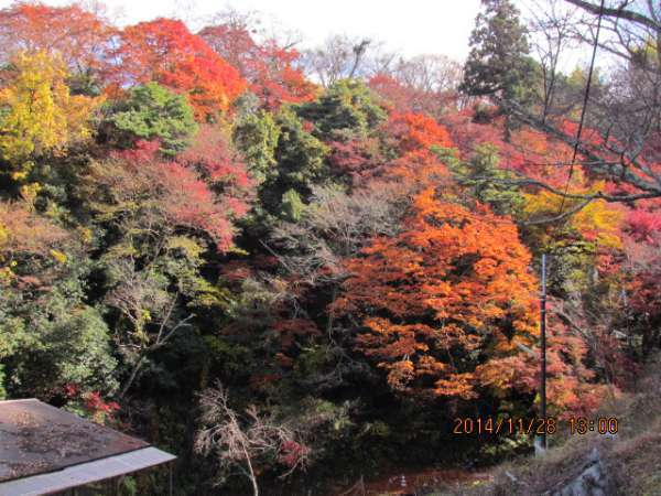 Beautifullly changing colors of Autumn Leaves