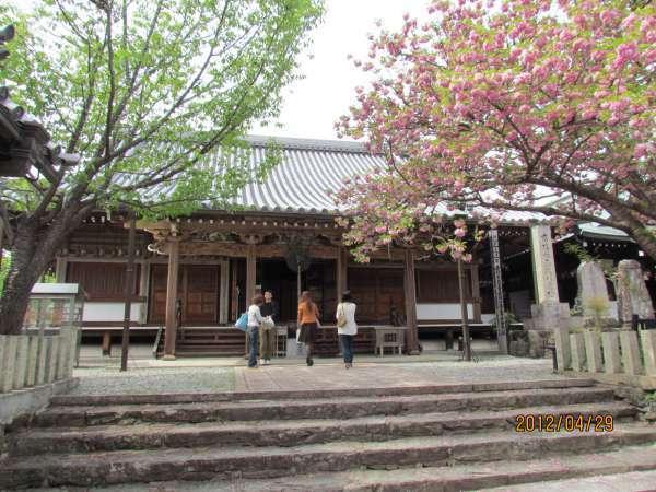 Sakura Honbo