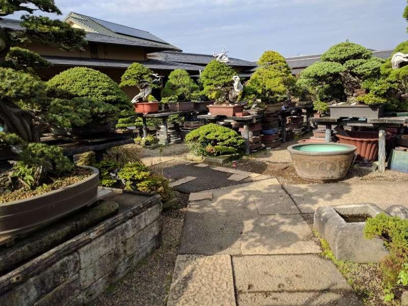 'Seikouen'  private bonsai  farm in the bonsai village.