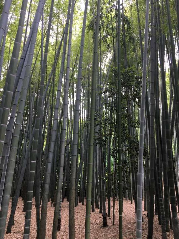 Hokokuji temple is well known as a bamboo temple. You can enjoy a bamboo garden in a quiet atmosphere unlike the one in Kyoto.