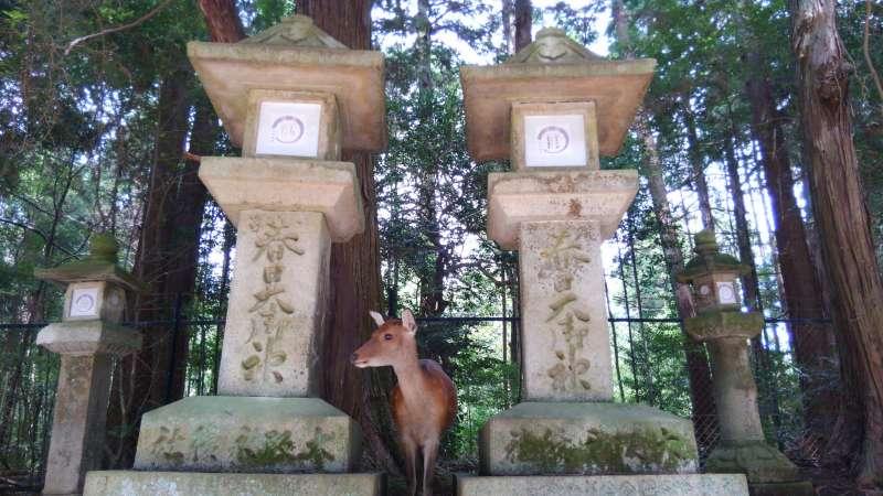 Deer & shrine
