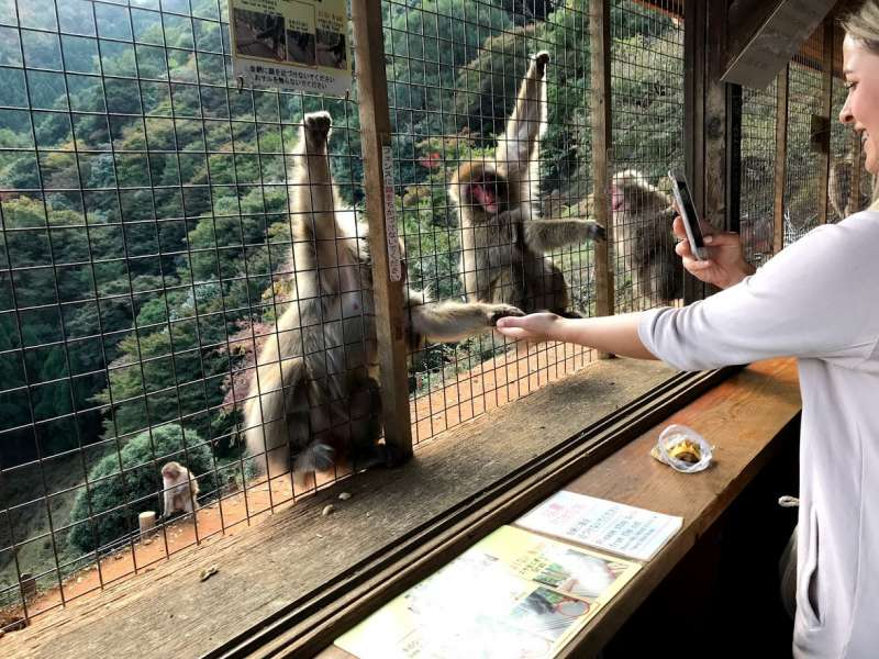 Arashiyama monkey park started in 1957.  More than 100 wild monkeys are tamed by professional staffs.  After 30 minutes cedar forest trekking, a visitor reachs monkey park.