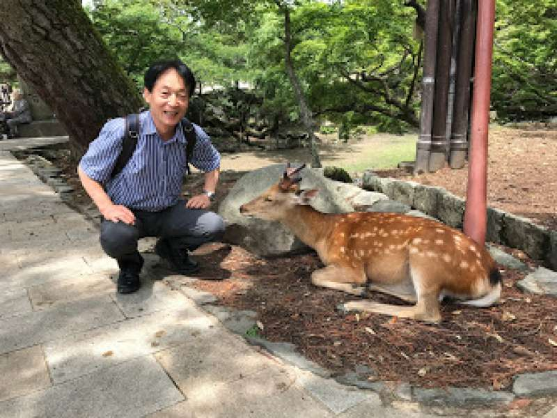 The number of deer is said more than 1000, but it is amazing to know all are wild.  In the 17th century Edo period, killing a deer was strictly prohibited to deserve a death penalty.