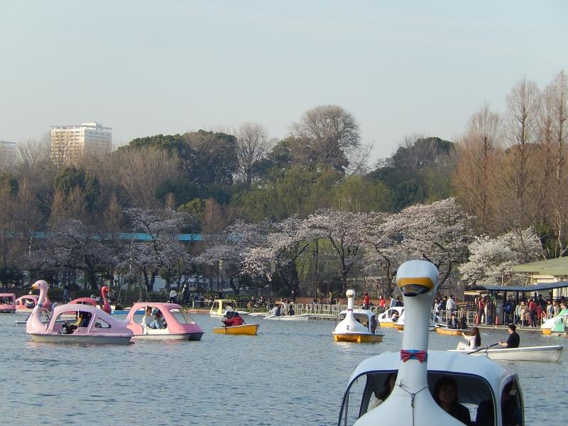 Shinobazu pond in Ueno park