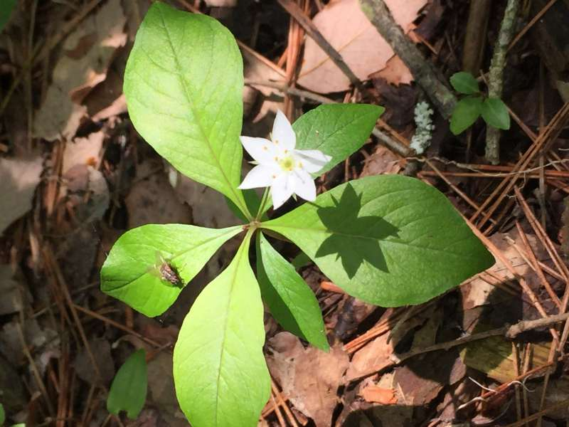 A pretty white flower in Aokigahara