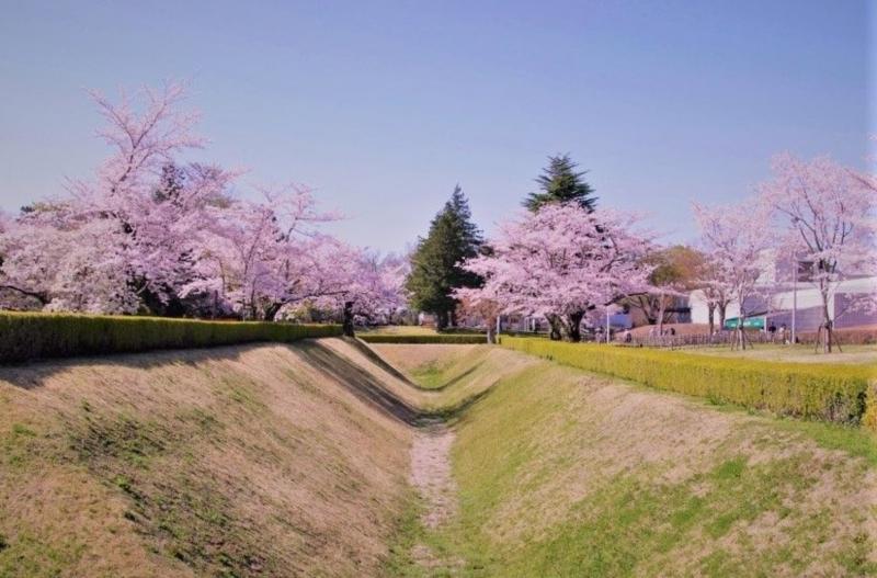 ☆SAKURA Castle Ruins Park.  It's a part of castle ruins called