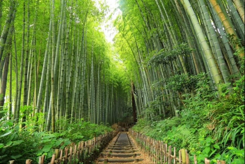 ☆Old Samurai Road