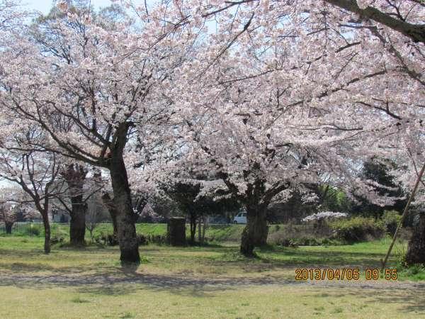 Cherry blossoms near Arashiyama Peak