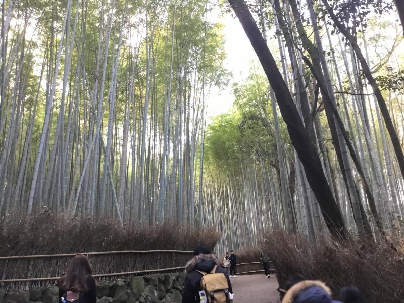 Bamboo forest in Arashiyama area