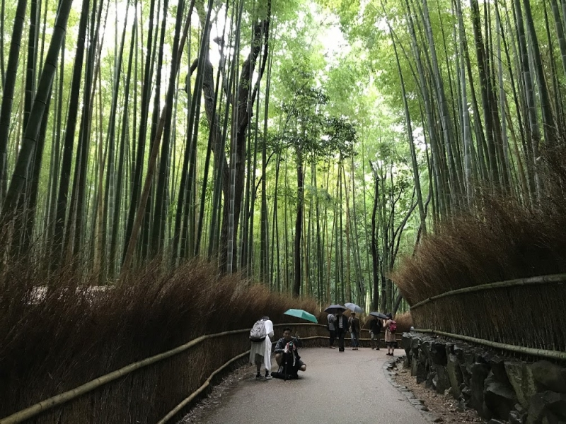 Bamboo forest boasting of stunning beauty.