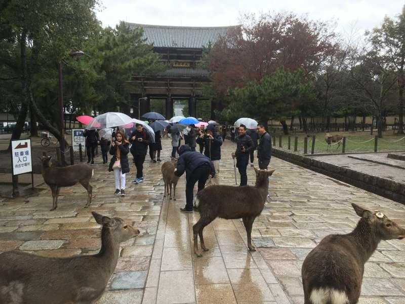Nara deer park You can feed cute wild deers.