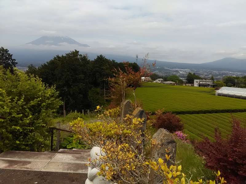 How about tea-leaf picking near the Mt. Fuji?