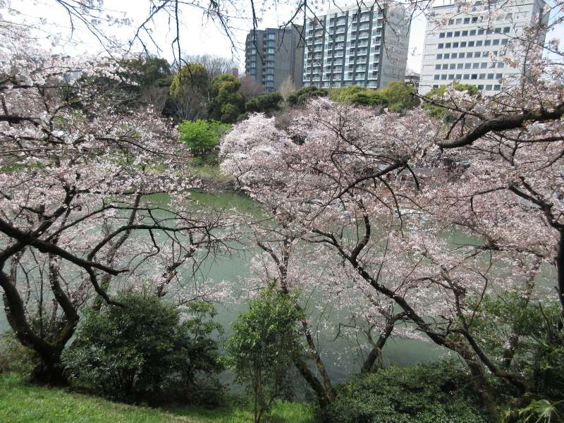 Chidorigafuchi moat surrounds Imperial palace.  During the feudal era,  moats were strongest protection of feudal castles.  They also played an important role as routs carrying materials.
