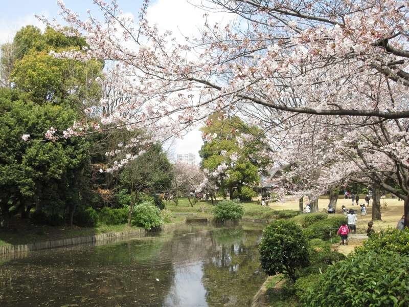The North Park of Imperial Palace.  Inperial Palace has 1 million square meters and there you can see thousands of cherry trees.