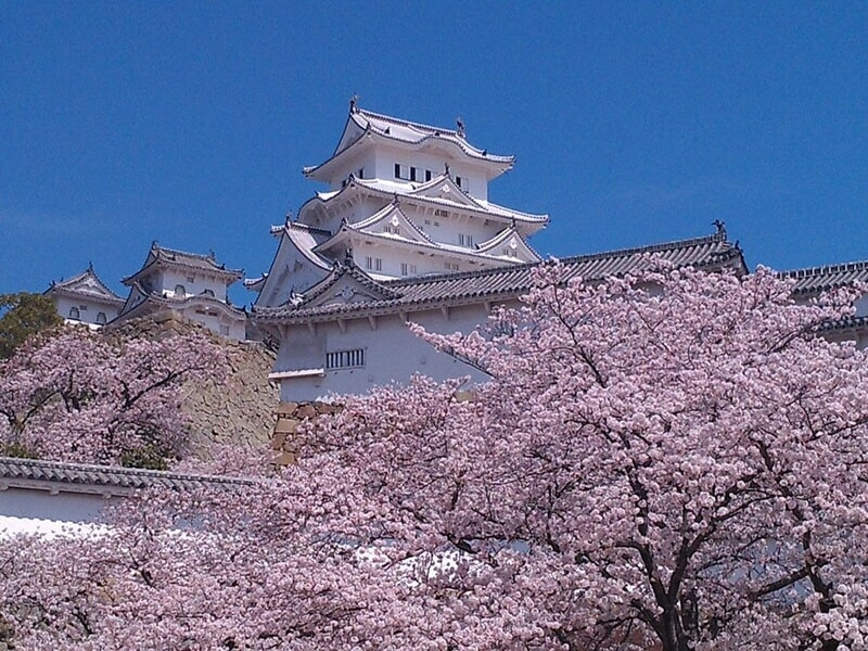 HImeji Castle, initially constructed in the mid 14th century as a fortress, with fully bloomed cherry blossoms in early April