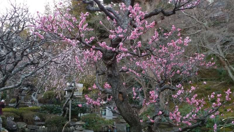 Hase-Dera temple is called a flower temple. Because you can see beautiful flowers in every season.