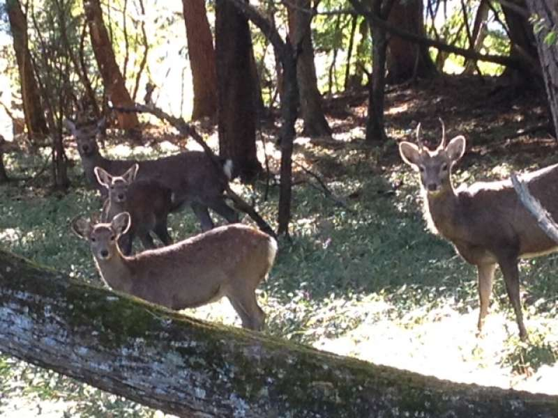 Deers appearing in the hiking course