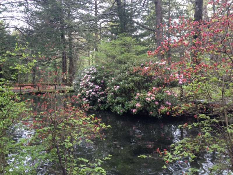 Highland Nikko Hiking and Cruising One-day Tour (May to Oct.)