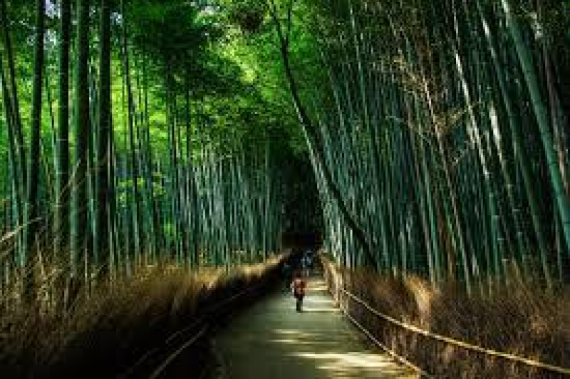"""Arashiyama Bamboo Forest is a time-honored beautiful place in Kyoto. So called """"Moon Crossing Bridge"""" is nearby."""