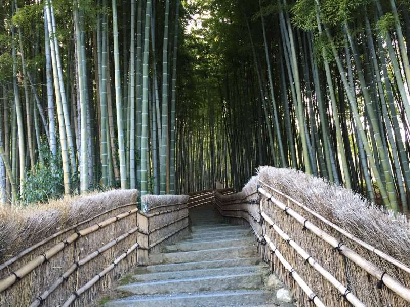 Bamboo Path in Arashiyama.