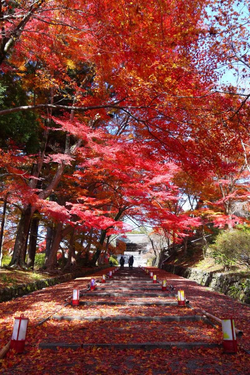 Bishamondo temple in Autumn foliage season