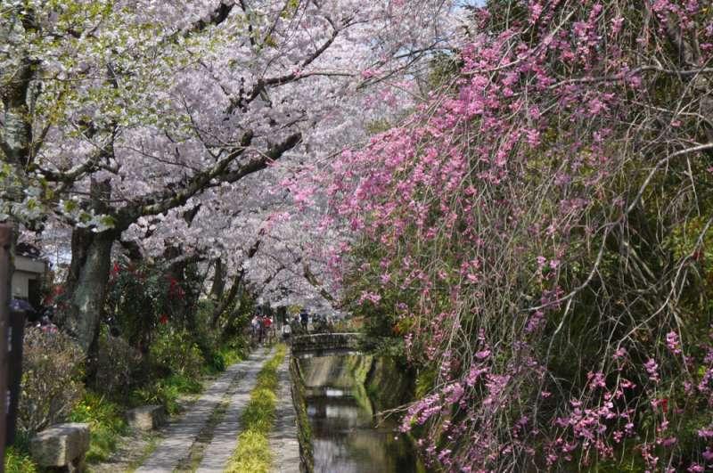 Philosopher's Path from Ginkakuji to Nanzenji
