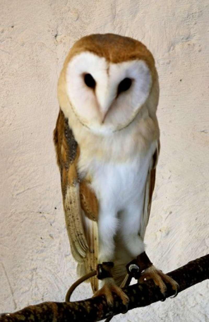 Owl in Yufuin Flower Village