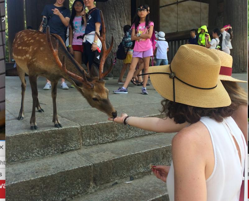 Feeding tame deer