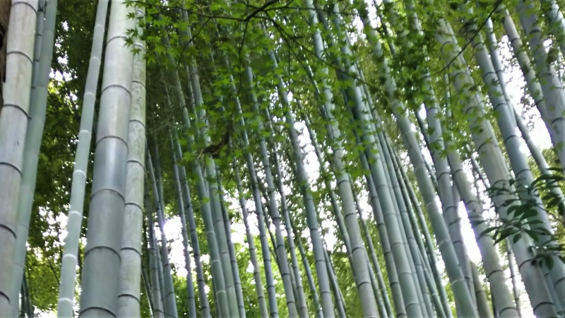 Walking beside bamboo bush