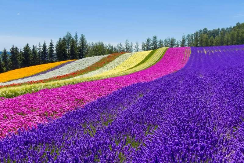 Flower Garden in Furano