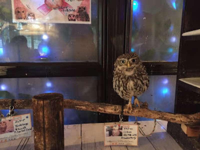 Wao!   Owl cafe in Akihabara