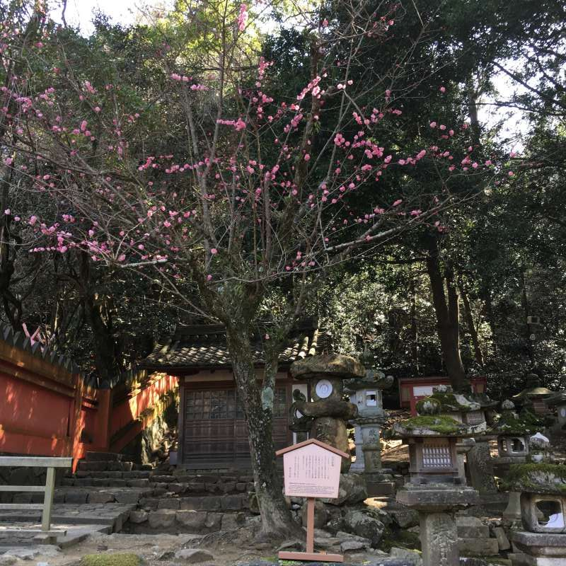 At Kasuga grand shrine