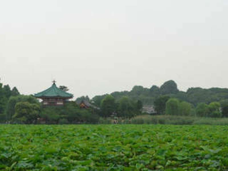 Ueno Park-Shinobazu Pond