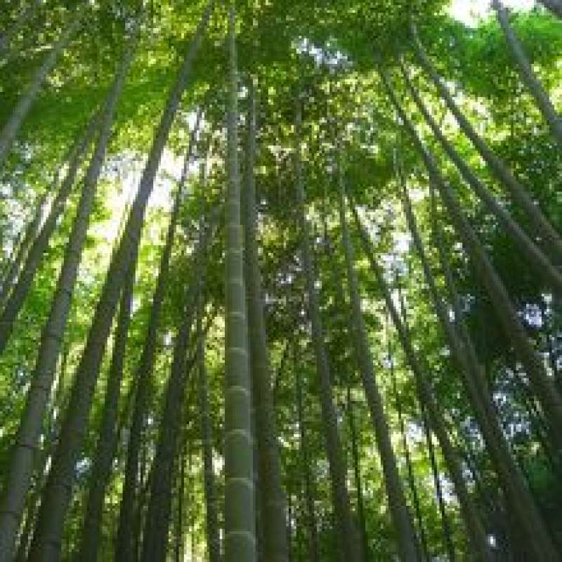 Hokokuji (Bamboo) Temple