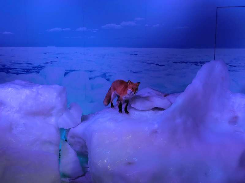 exhibition room for you to touch real drift ice