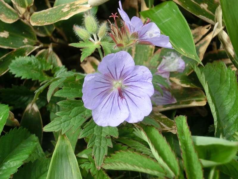 Alpine plant called