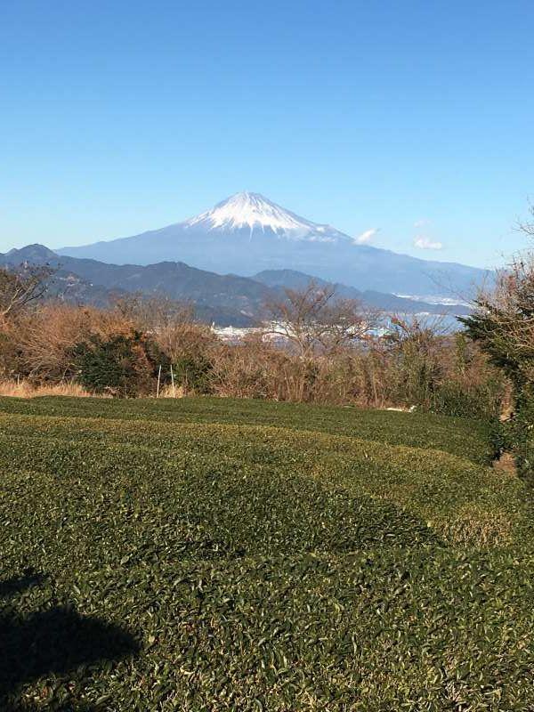 Tea farm with view of Mt.Fuji