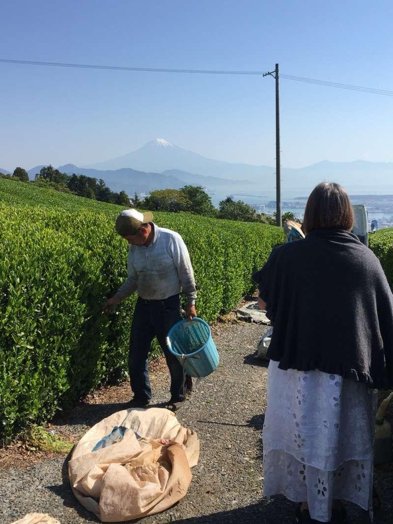 another tea farm near Nihondaira