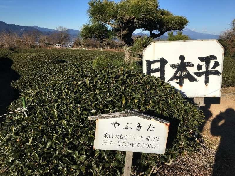 Tea farm in Nihondaira plateau