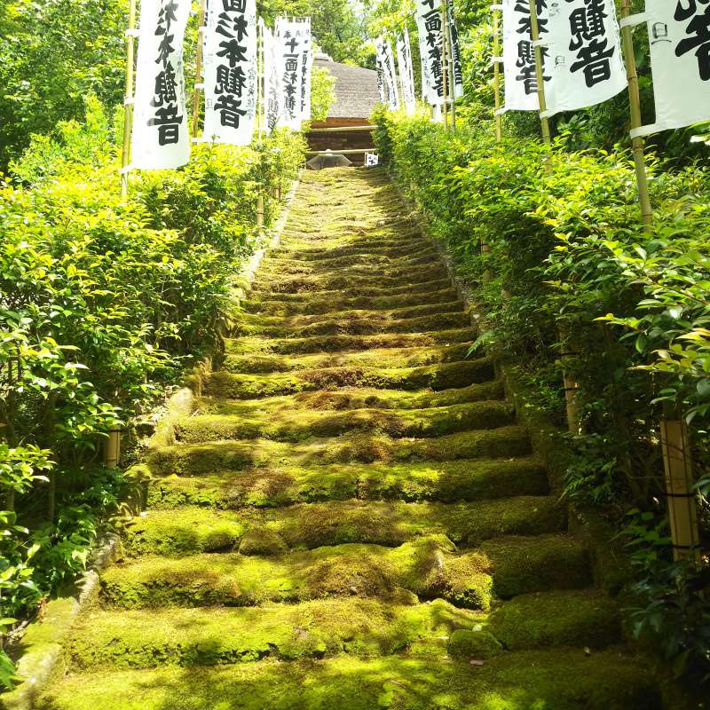stairs covered by moss in Sugimoto-Dera or Sugimoto Temple