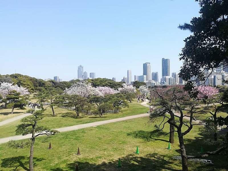 Beautiful contrast between Japanese garden and modern high rise in Hamarikyu garden.