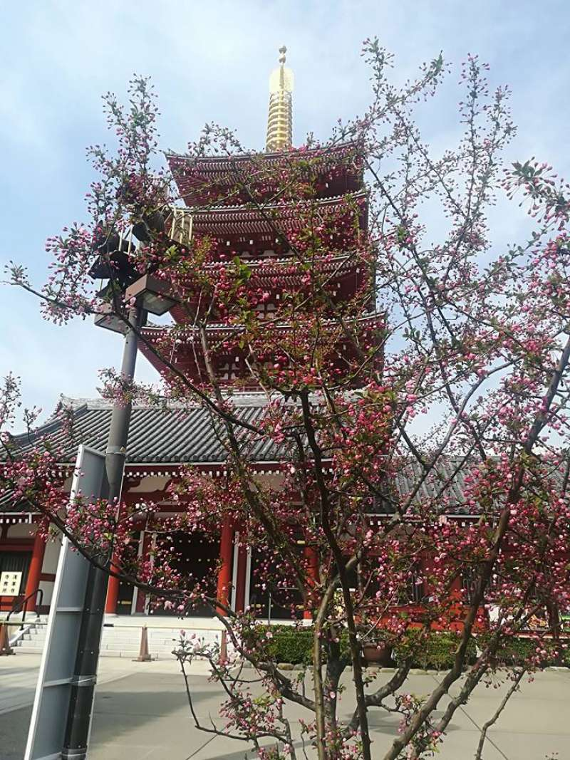 Five story pagoda in Sensoji temple