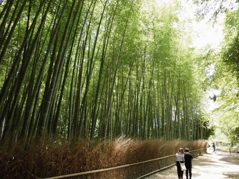 Arashiyama, Bamboo grove
